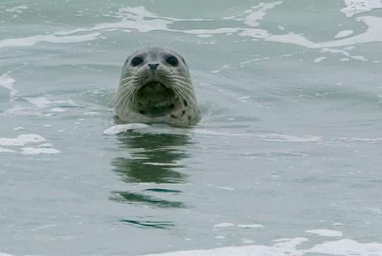 seal no2