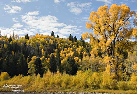 cottonwood fall colors