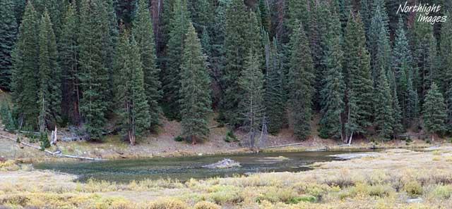 beaver dam and lodge