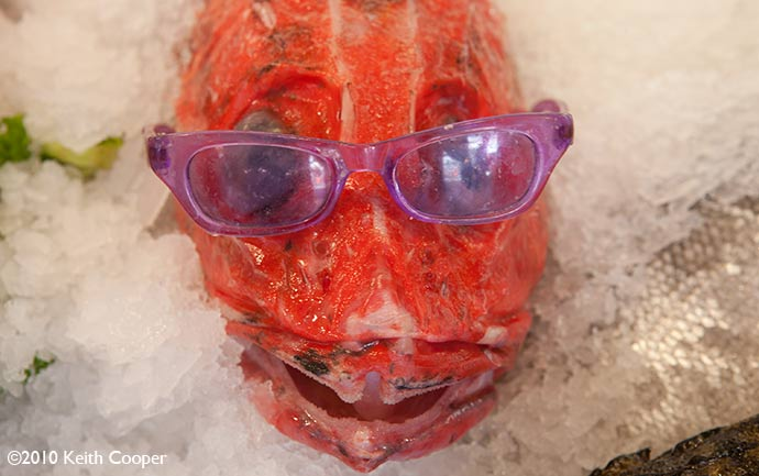 red snapper with sun glasses