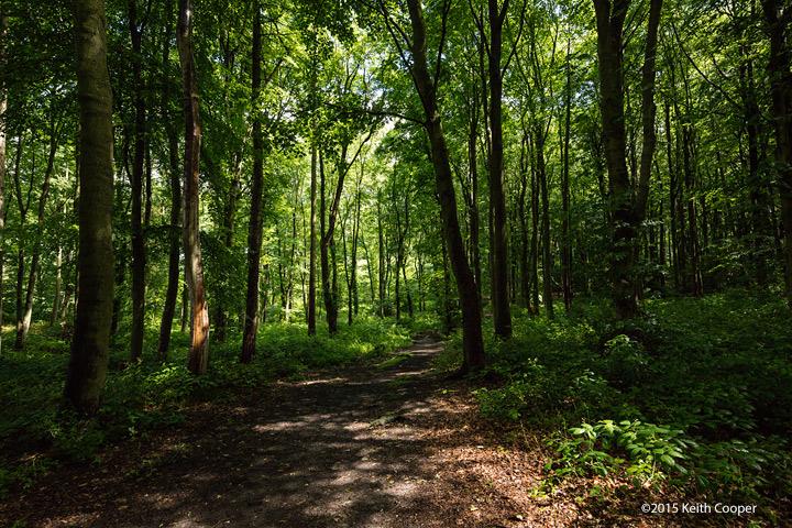 Jubilee woods, Loughborough