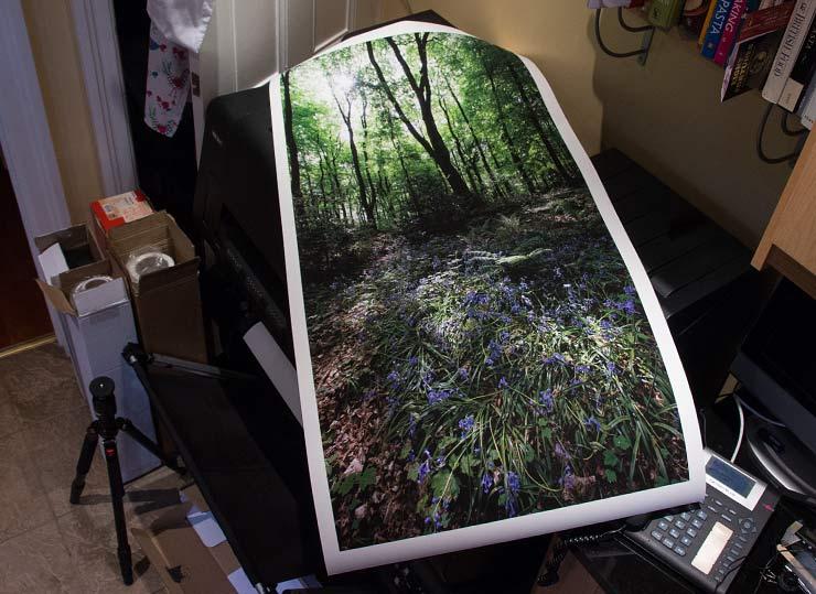 large woodland print