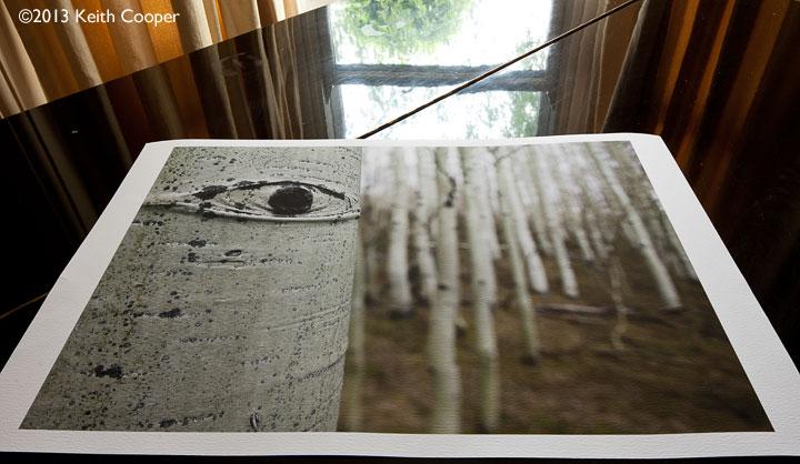 colour print of aspen eye on innova ifa23