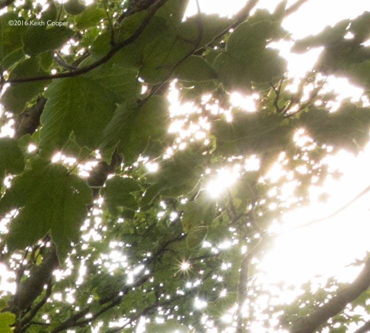 detail of tree image