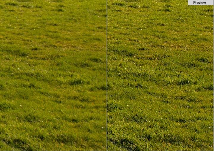 fine detail i grass