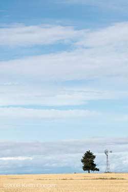 oregon wheatfield