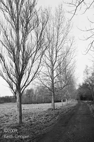 Trees and lane, December morning