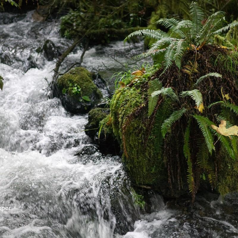 Cascades river 4