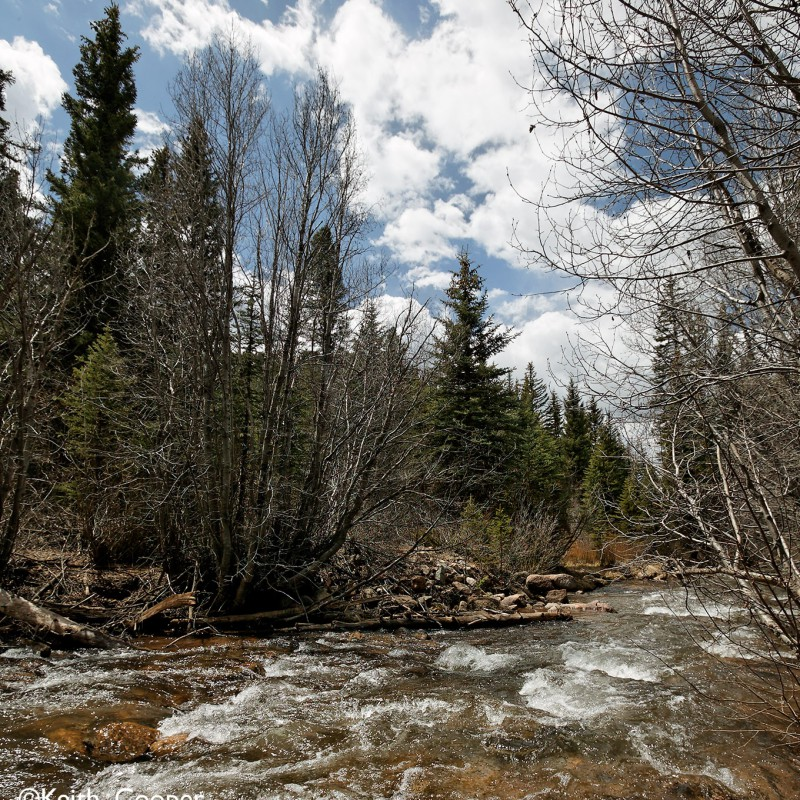 Mountain stream 9