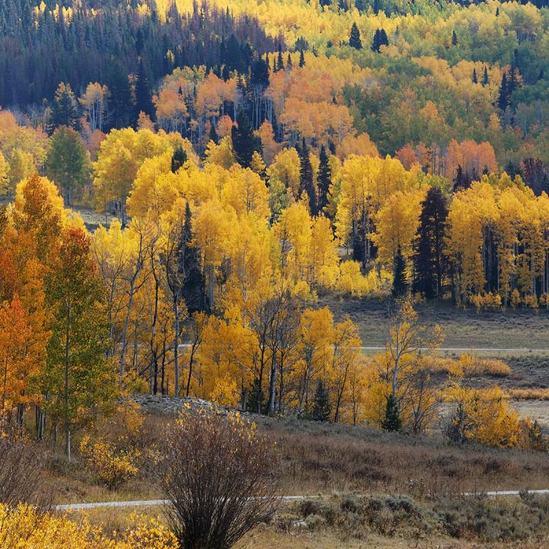 Fall colours - Colorado 1