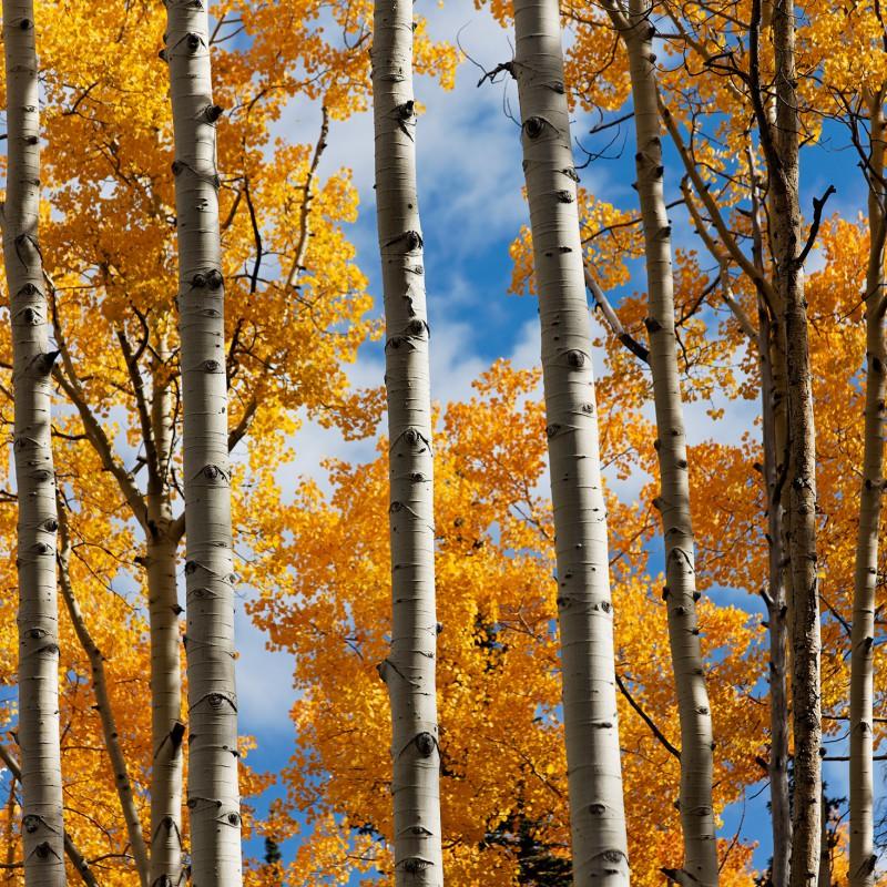 Fall colours - Colorado 4