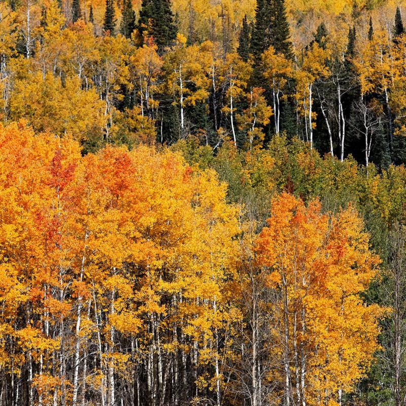 Fall colours - Colorado 5