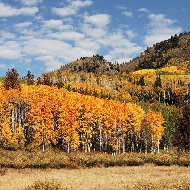 Fall colours - Colorado 6