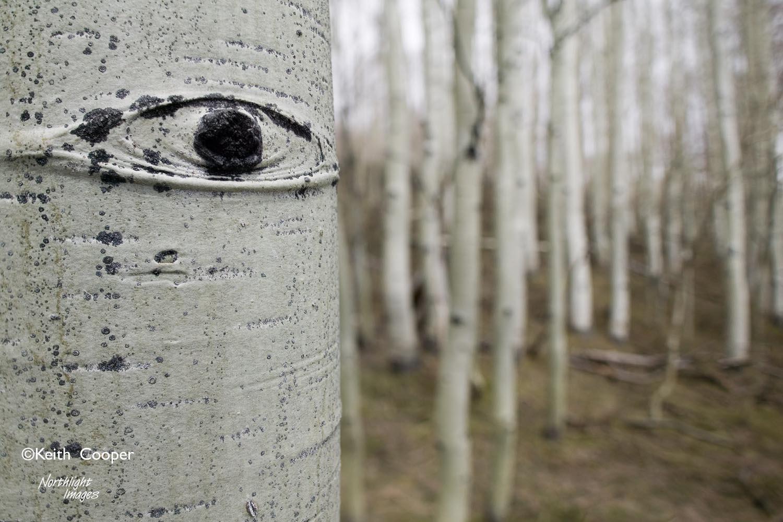 Aspen Eye 2