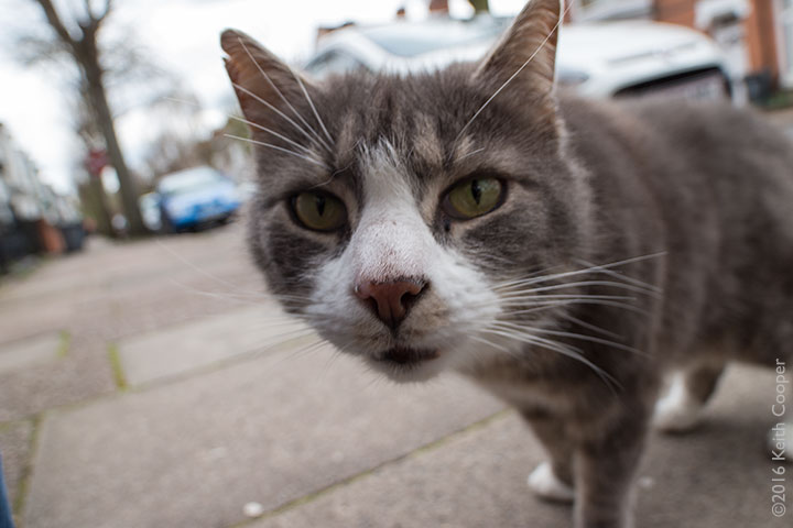 Close view of cat with Laowa 15mm lens