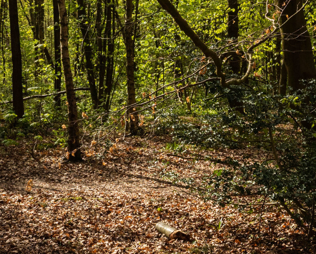 woods 100 centre