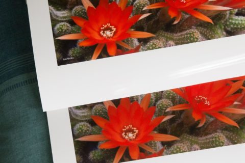 A photo print of some bright red flowers