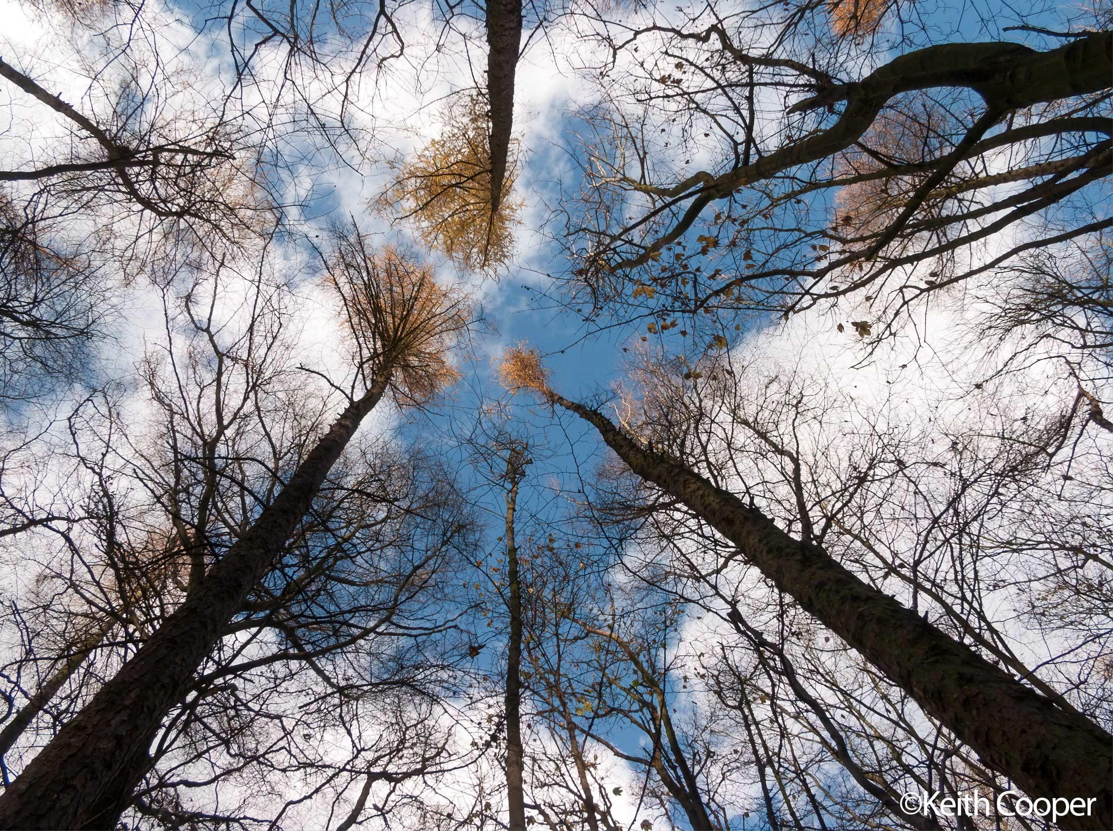 e20-trees