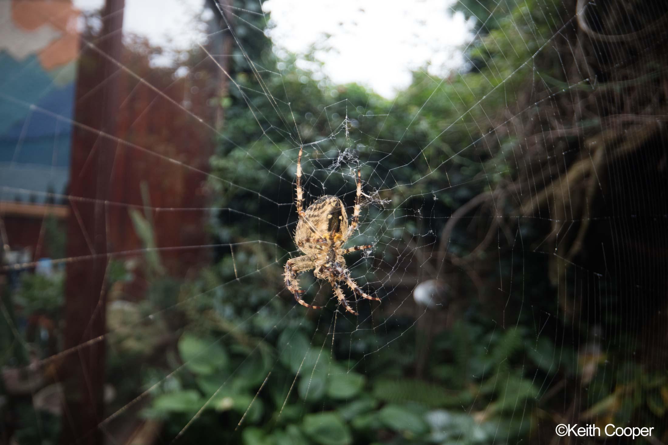 lit spider