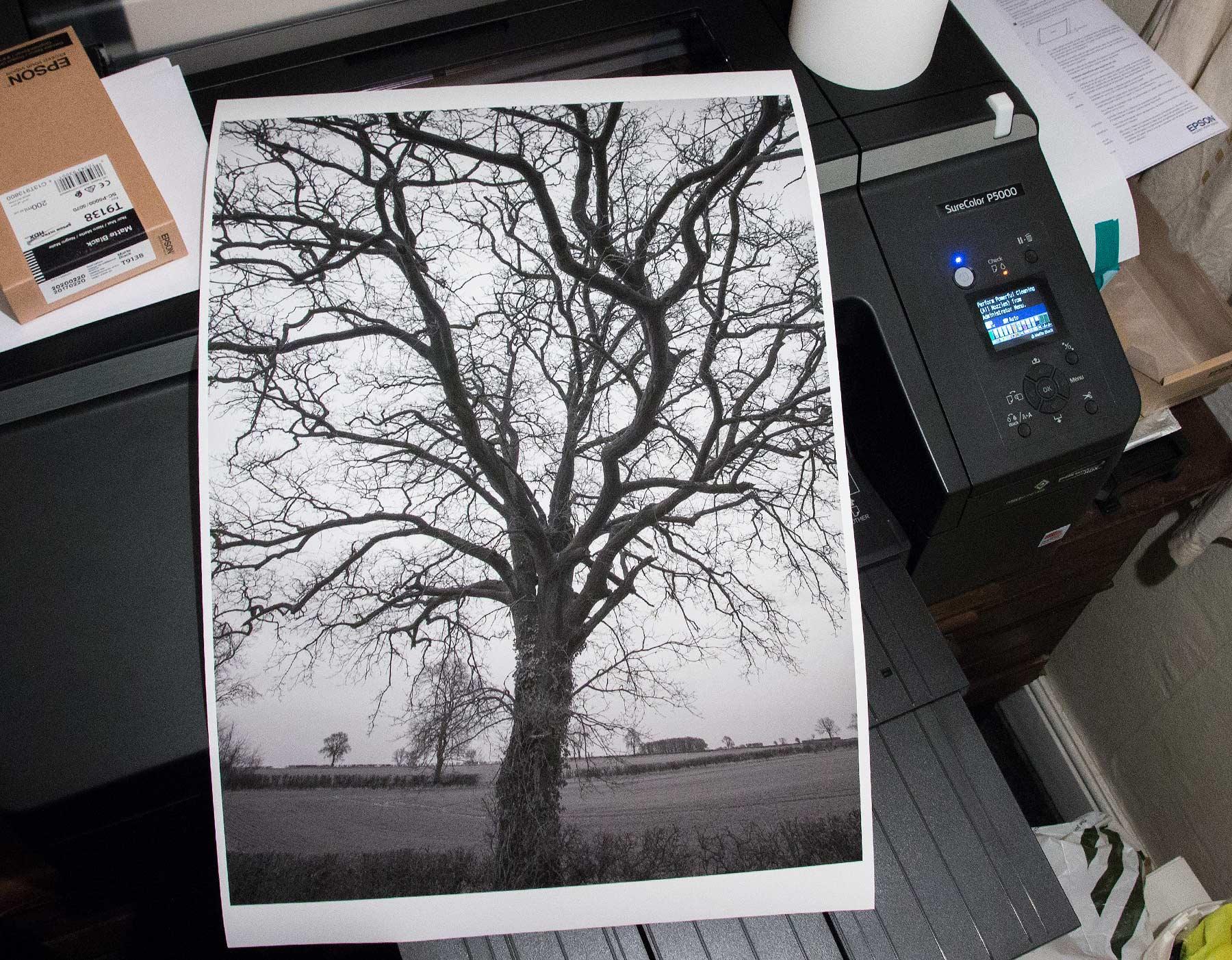 BW print of tree