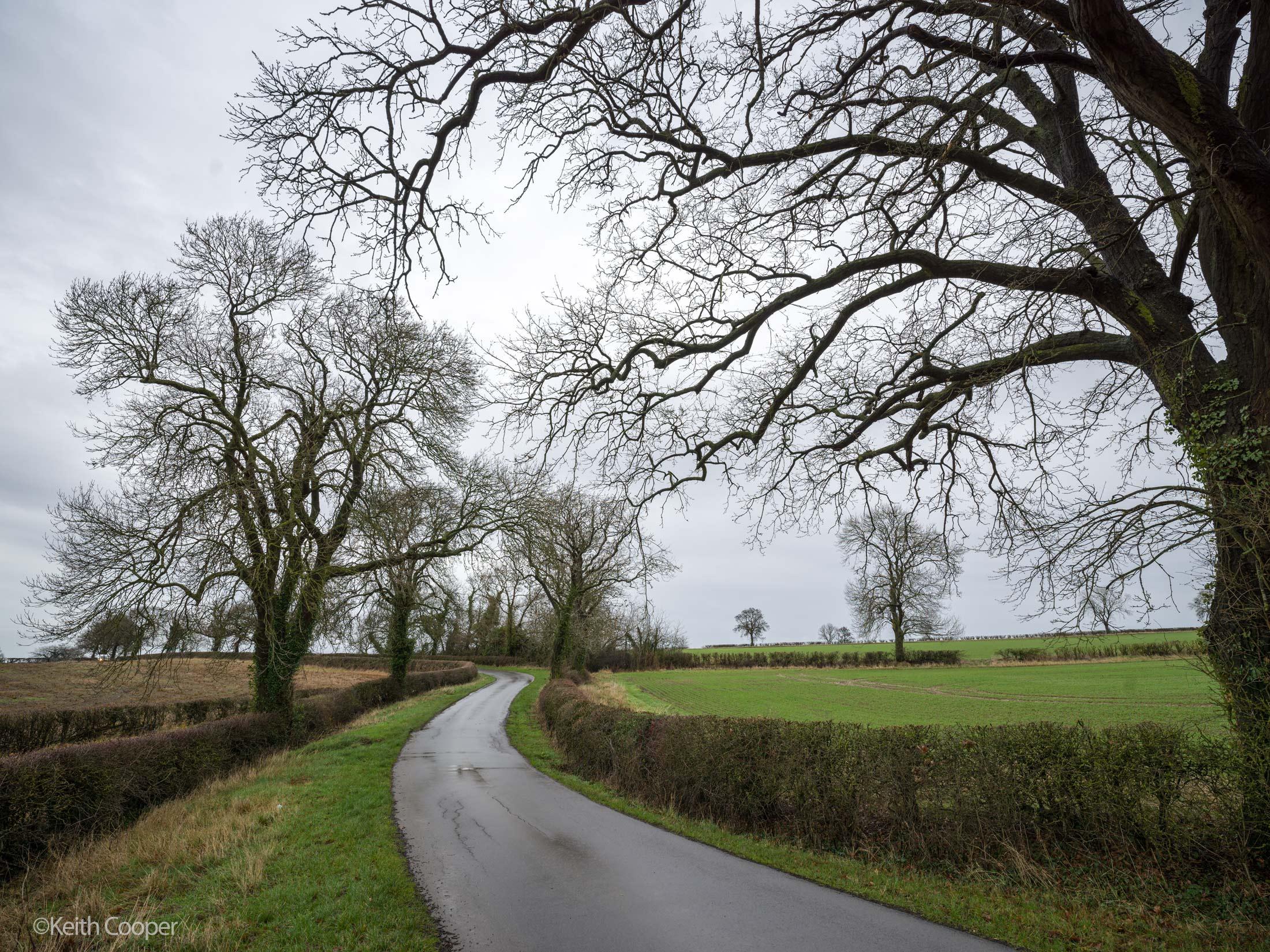 damp trees