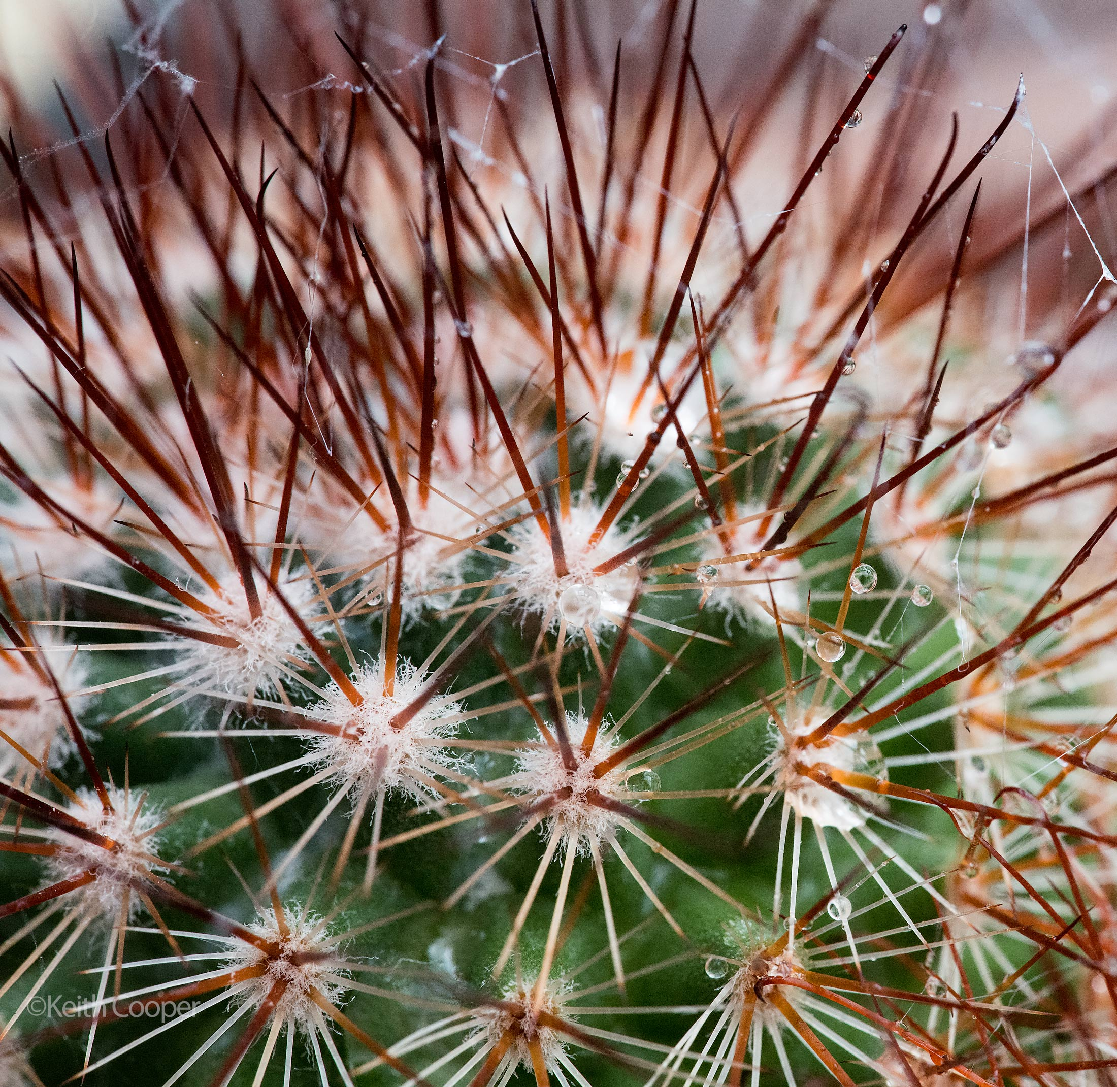 cactus-watering