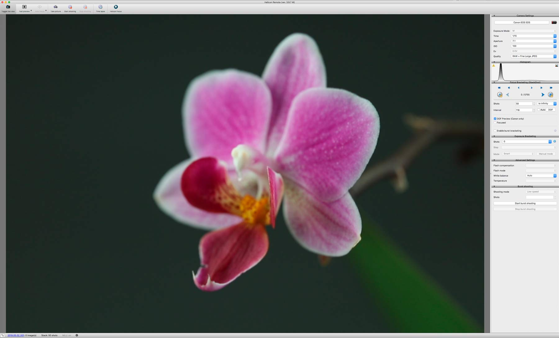 orchid-close