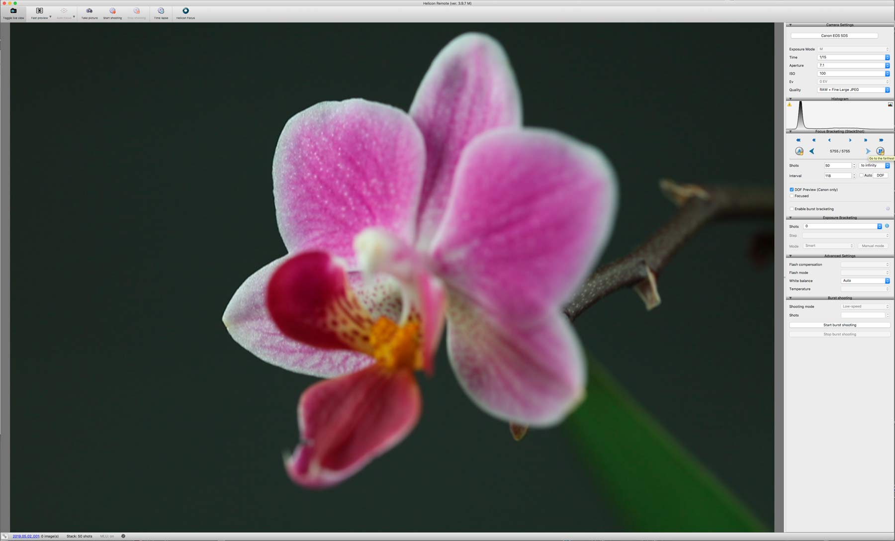 orchid-far