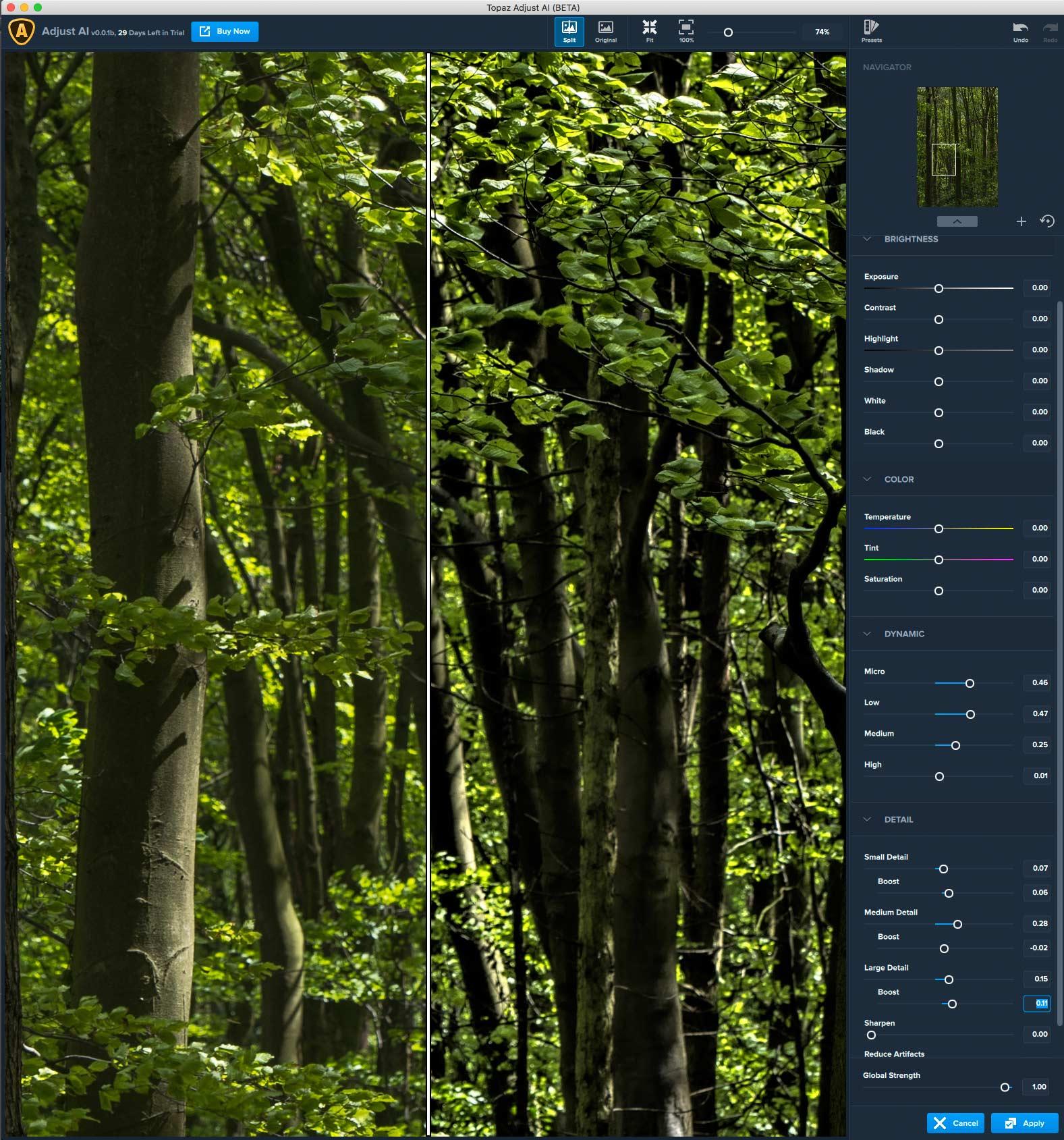 woodland-detail