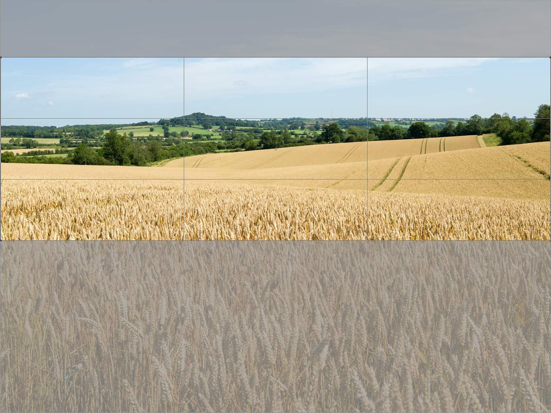 an-initial-crop