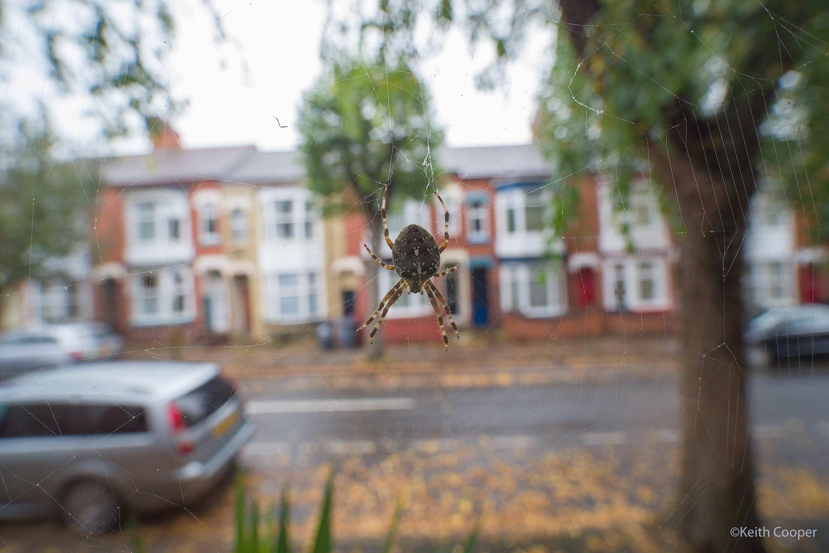 spider f/5.6