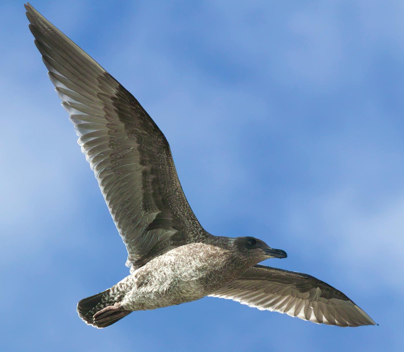 bird-lightened