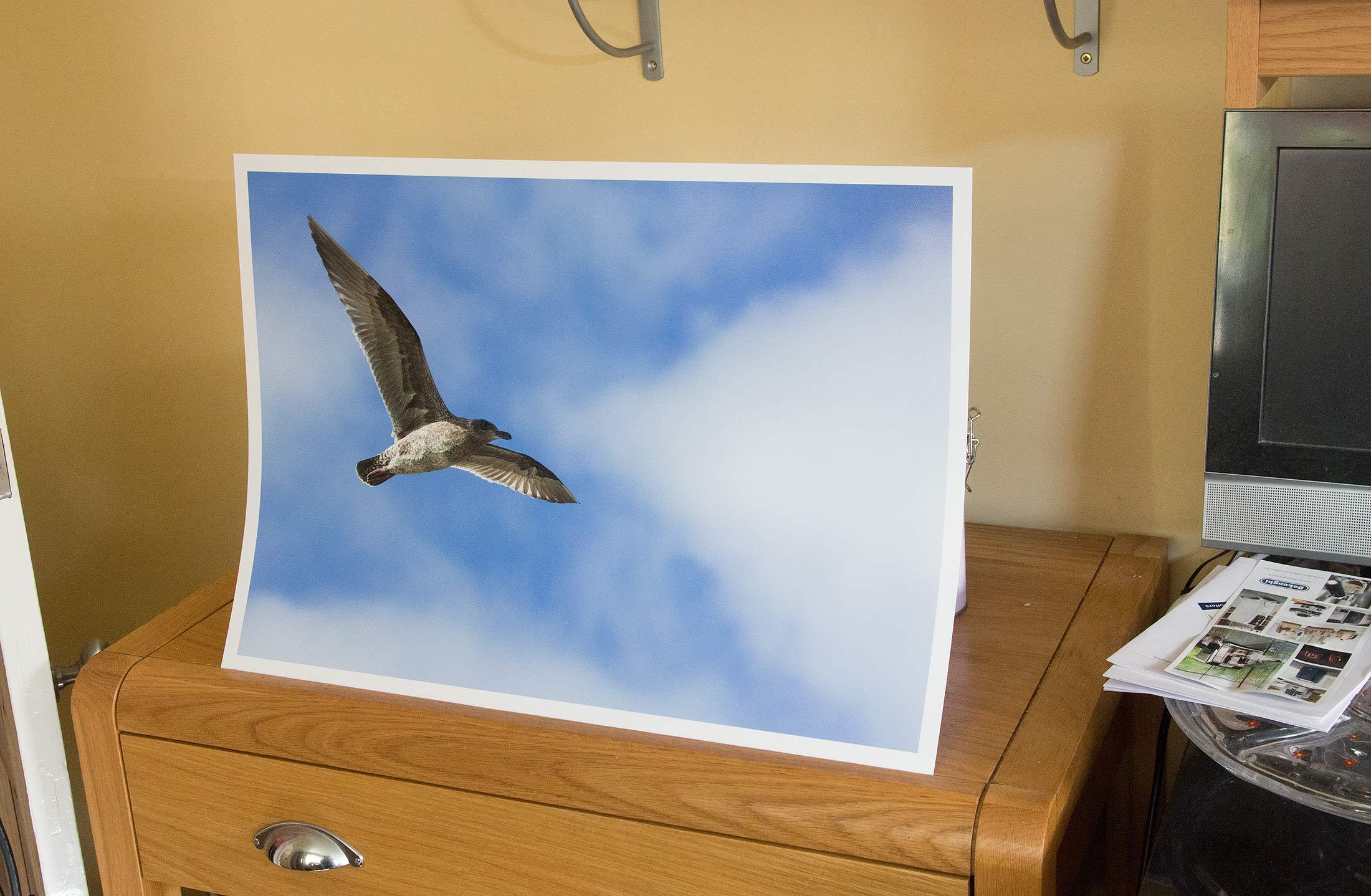 seagull-print