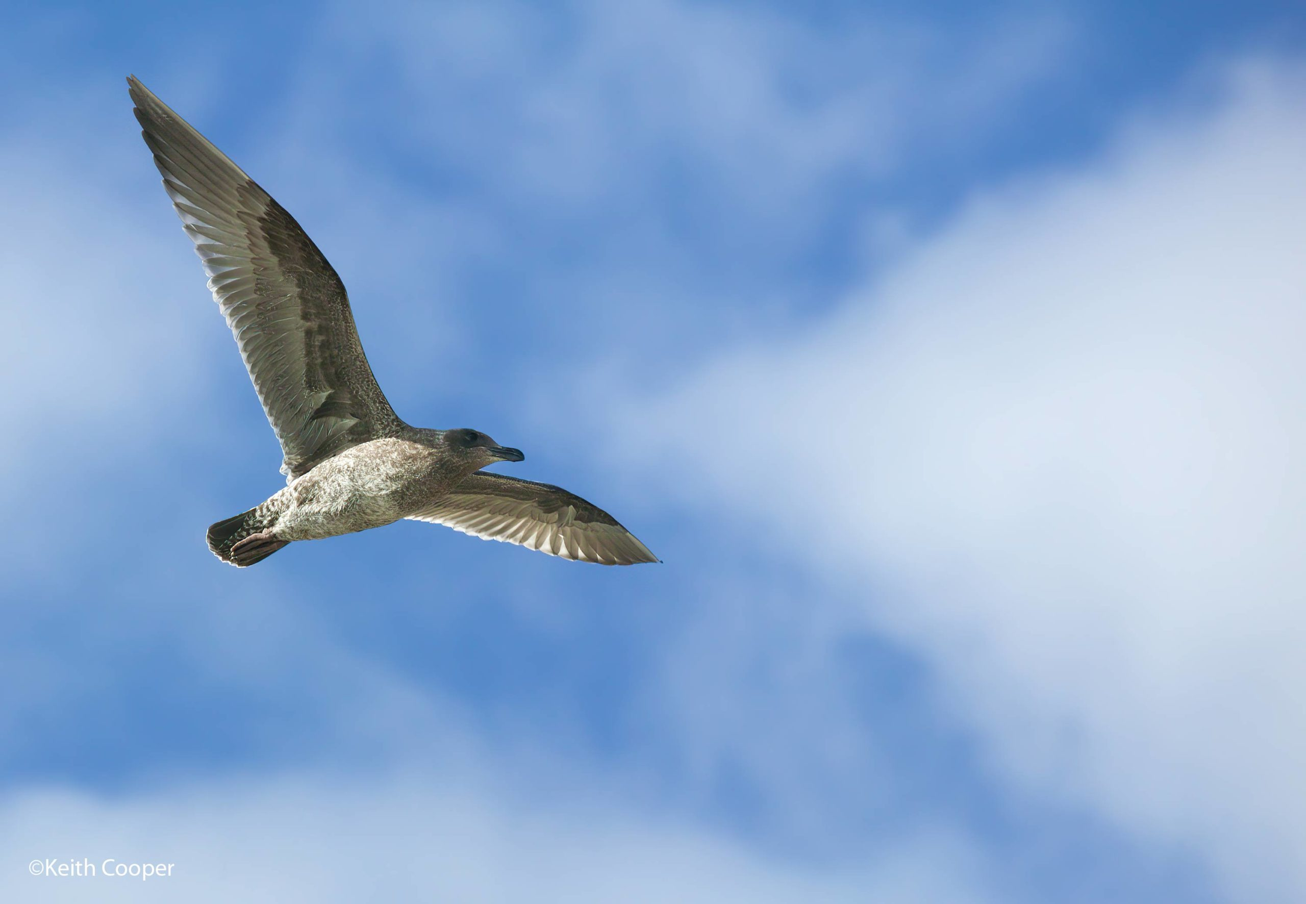 seagull_2020