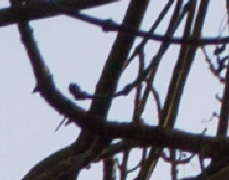twigs-CA-corrected